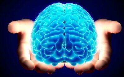 Cervello grasso e omega 3